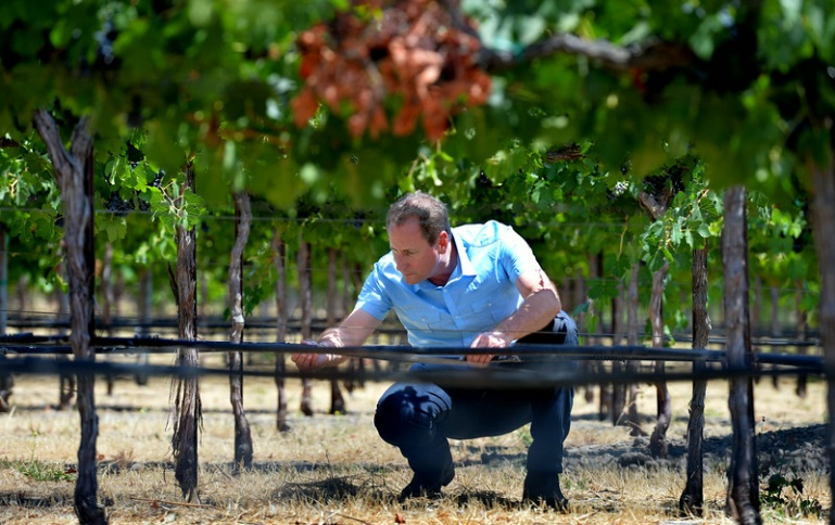 Vineyard Team Irrigation System Evaluations Cost Share